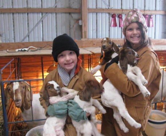 Pregnancy Toxemia In Boer Goats