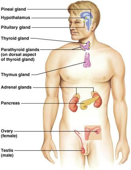 What Hormone Causes Glucose To Be Removed From The Blood And Stored