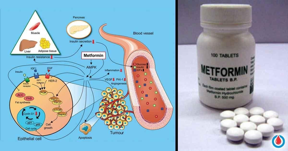 What Happens If You Take Metformin And Don't Need It