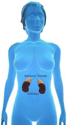 Adrenal Fatigue