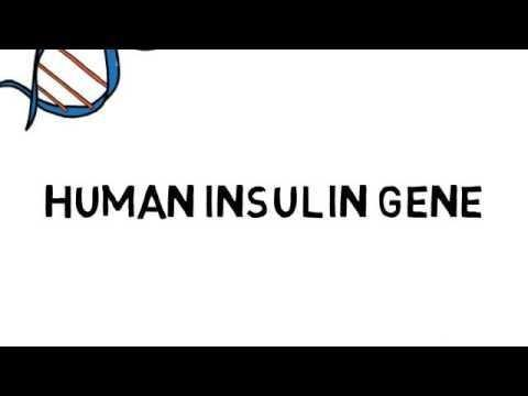 Insulin Synthesis By Recombinant Dna Technology