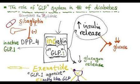 Incretin Glp-1