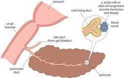 Opposite Of Diabetes Insipidus