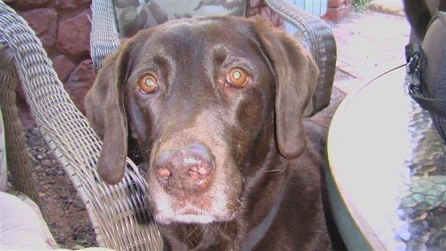 Dog Pancreatitis Cured Naturally & Avoids Diabetes