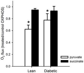 Effect Of Metformin On Muscles