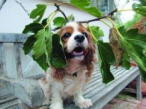 Managing Diabetes In Dogs