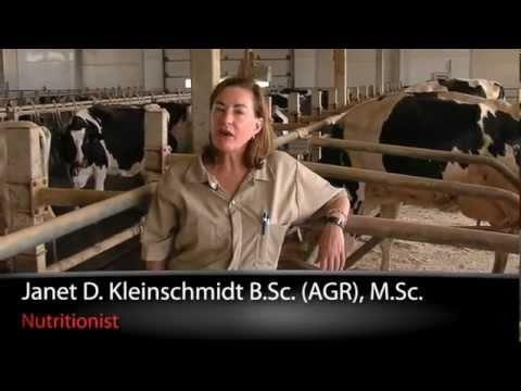 What Is Acidosis In Cattle?
