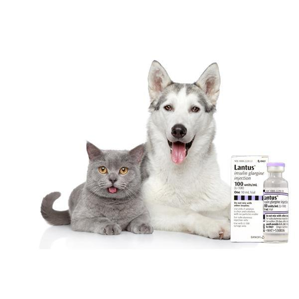 Insulin For Cats Lantus