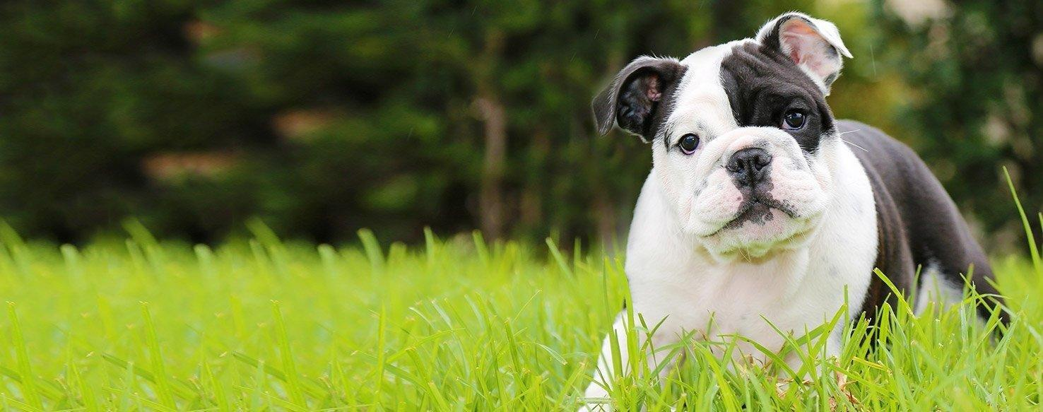 How To Train Your Dog To Detect Low Blood Sugar