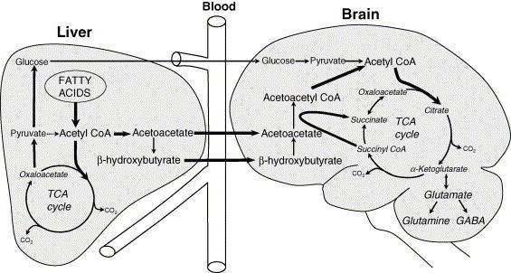 Ketosis: Anti-brain Fog. Neurotransmitters, Dietary Protein, And The Gut Microbiome.