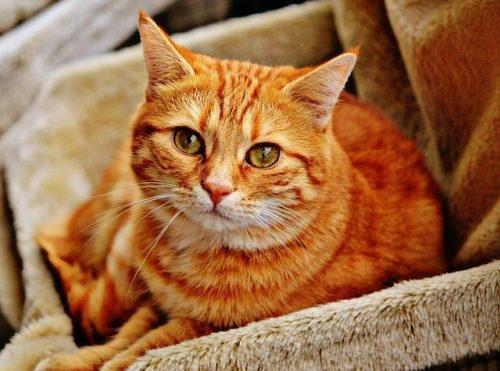 Recognizing Signs of Diabetes in Cats