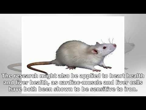 Eugenosedin-a Improves Glucose Metabolism And Inhibits Mapks Expression In Streptozotocin/nicotinamide-induced Diabetic Rats - Sciencedirect
