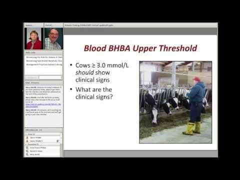Minimizing The Risk For Ketosis In Dairy Herds