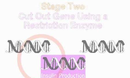 Who Makes Insulin