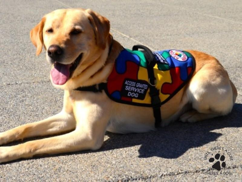 How Much Does It Cost To Get A Diabetic Alert Dog?