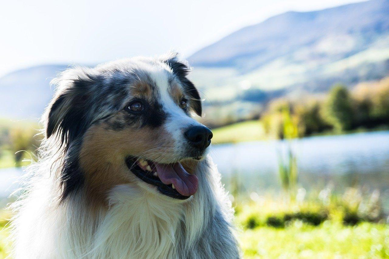 What Are The Symptoms Of Diabetes Mellitus In Dogs?