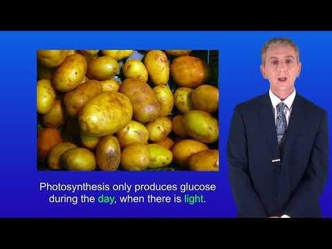 Why Do Plants Make Glucose For Themselves