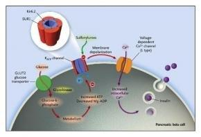 C Peptide Level In Type 1 Diabetes