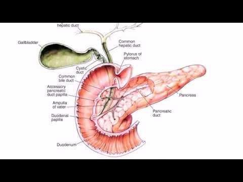 Metformin And Chronic Pancreatitis