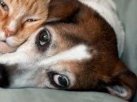 Dogs With Diabetes