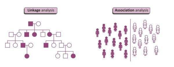 Genetics Of Type 1 Diabetes