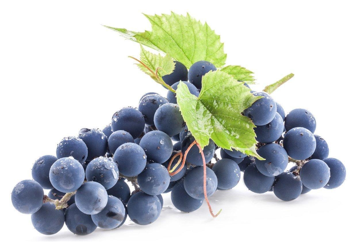 French Opc Grape Seed For Diabetes, Heart, Cancer And More : Terry Talks Nutrition