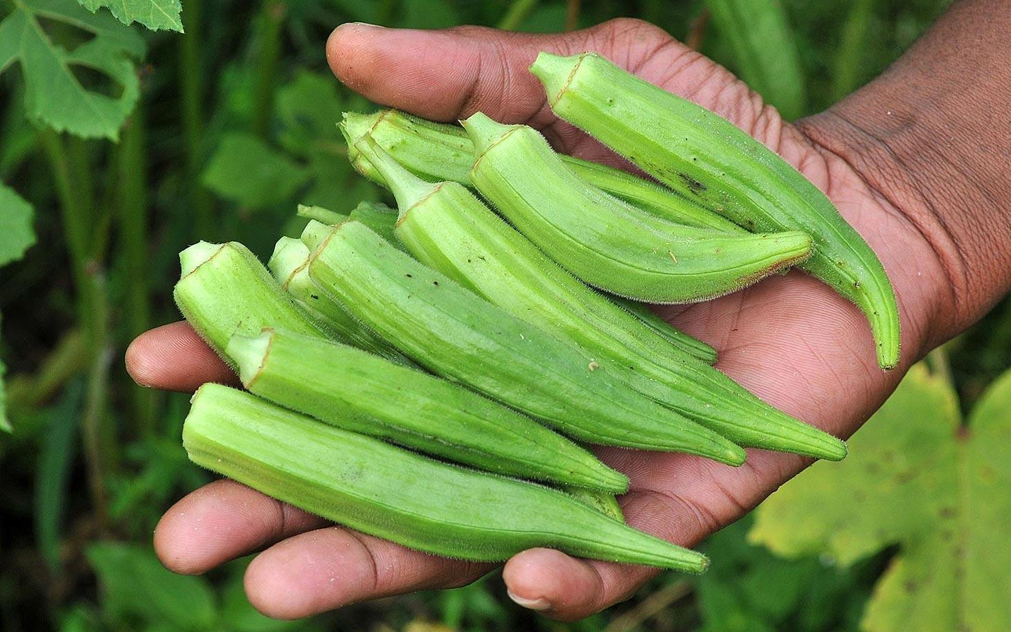 Unbelievable: Treat Diabetes, Asthma, Cholesterol And Kidney Diseases With Okra Water- Now You Can Make It Yourself