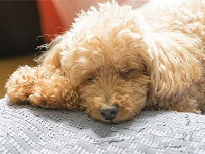 What Can Cause High Blood Sugar In Dogs?