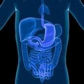 No Diabetes Without Leaky Gut