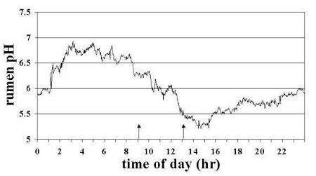 Sub-acute Ruminal Acidosis (sara) In Dairy Cows