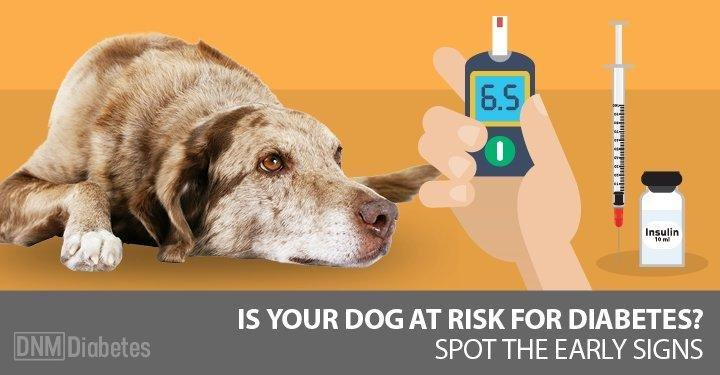 What Causes Diabetes In Dogs? The Signs, Symptoms And What To Do About It