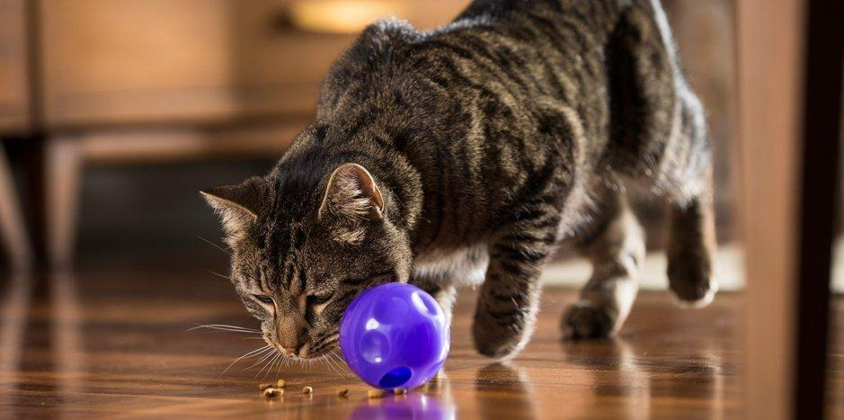 What Causes Cat Diabetes?