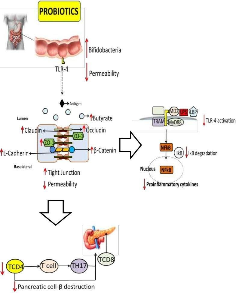 Gut Microbiota, Probiotics And Diabetes