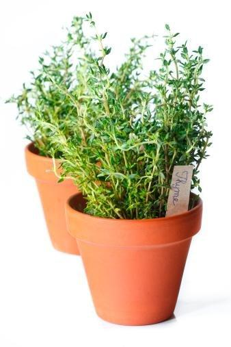 Health Benefits Of Thyme One Of Nature's Top Antioxidant Foods