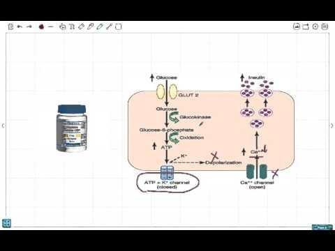 Is Metformin A Sulphonylurea?