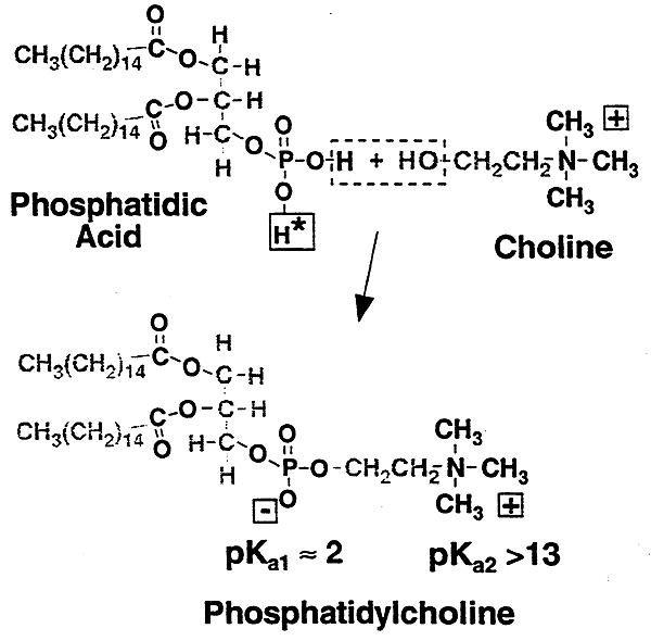 Acidosis/alkalosis: