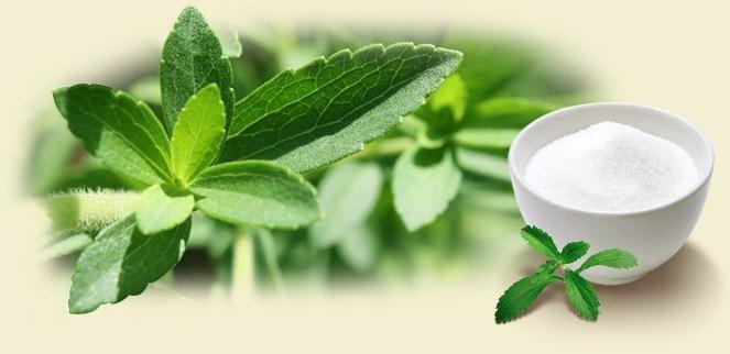 La Estevia Y Otras 7 Plantas Medicianales Para Luchar Contra La Diabetes