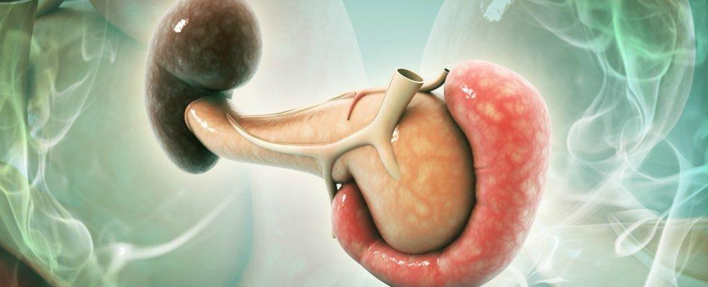 Losing Just 1 Gram of Fat in The Pancreas Can Reverse Type 2 Diabetes