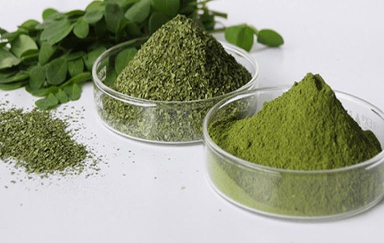 Moringa – The Herb That Kills Cancer And Stops Diabetes